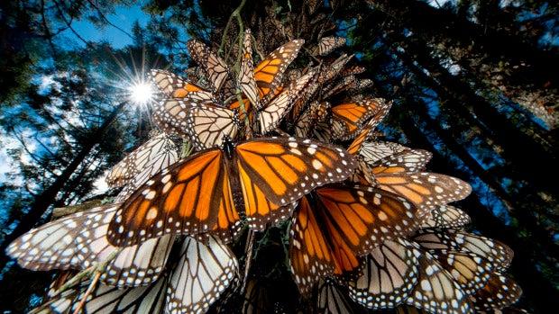 Naturaleza:  Mariposas, el lenguaje del color