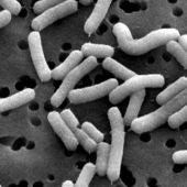 En el Centro de Investigación D. Carasso de París investigan las bacterias.