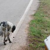Perros abandonados, un drama que se ha repetido un verano más.