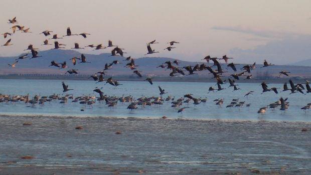 """Arantza Leal: """"El cambio climático hace que muchas aves salten del nido por el calor sin estar preparadas"""""""