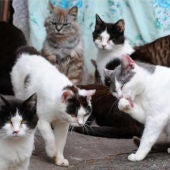 Gatos de una colonia felina