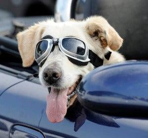 Naturaleza: Consejos para aprender a educar a tu mascota