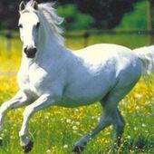 fósforos: ¿Te gusta montar a caballo?