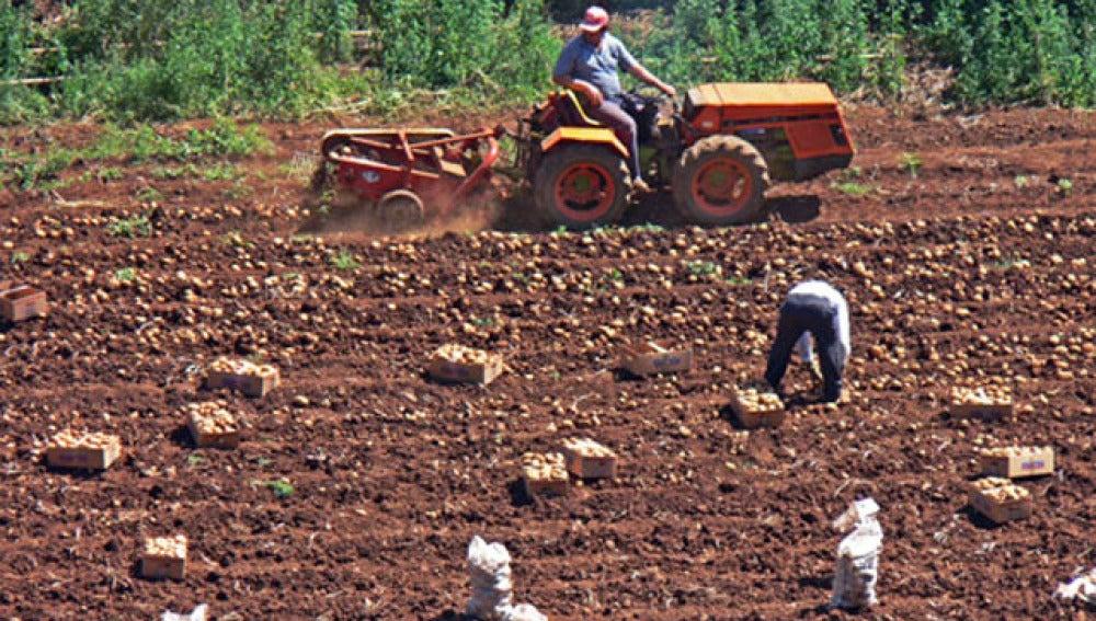 Imagen de archivo: agricultores españoles.