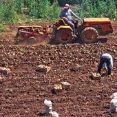 Trabajadores agrícolas.