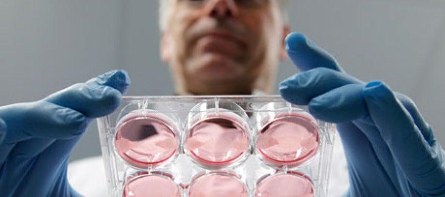 Mark Post sujeta muestras de carne artificial creciendo