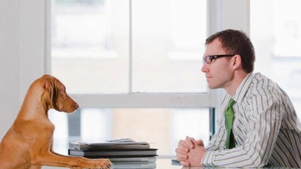 Tabla redonda: ¿Llevarías a tu mascota a la oficina si pudiera hacerlo?