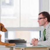 Perro en la oficina