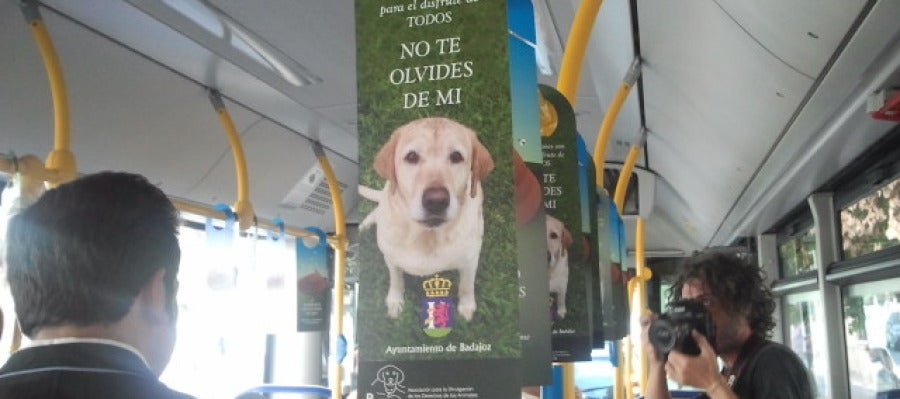 Campaña abandono animal