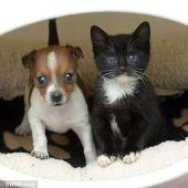 El perro Buttons y el gato Kitty