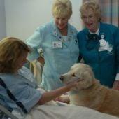 Terapia con perros en el hospital