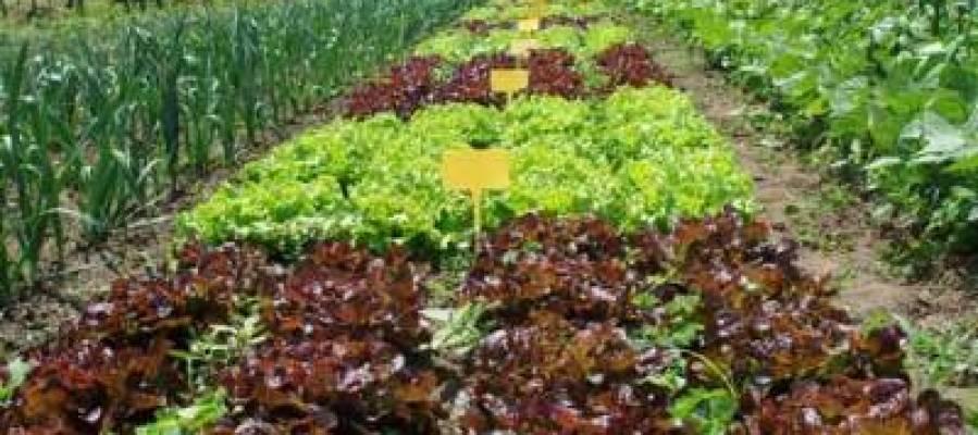Un campo de agricultura