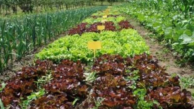 ¿Qué pasaría si nos alimentásemos solo de agricultura ecológica?