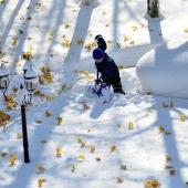 Un joven intenta retirar nieve junto a un coche cubierto de ella
