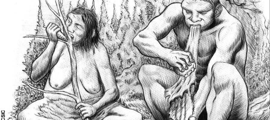 Los neandertales