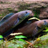 211 especies descubiertas al este del Himalaya