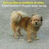 Rufo, perro perdido