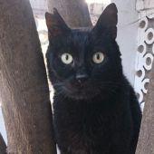 Dennis, un gato maltratado