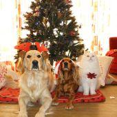 Perros y gato en Navidad