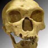 ¿Por qué los neandertales eran tan diferentes a nosotros?