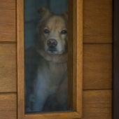 Perro en puerta