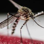 Mosquito transmisor del virus Zika