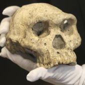 Cráneo de un homínido - Imagen de archivo