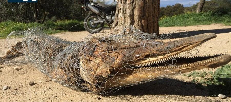 Cadáver de un delfín en la Casa de campo de Madrid