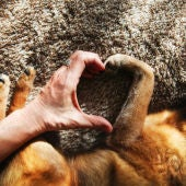 Personas y perros