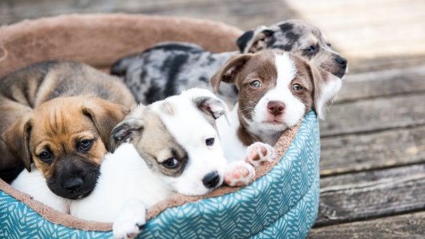 El Hospital Niño de Jesús incorpora intervenciones asistidas con perros en niños con anorexia