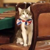 El gato Larry, el 'ratonero jefe' del Downing Street