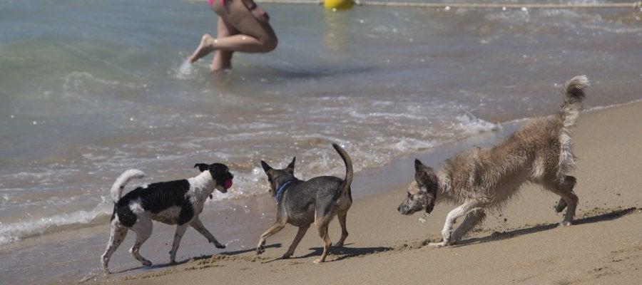 Los perros disfrutan en una playa.