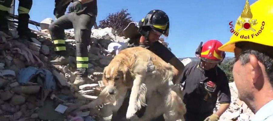 Los bomberos rescatando al perro de entre los escombros nueve días después del terremoto de Italia