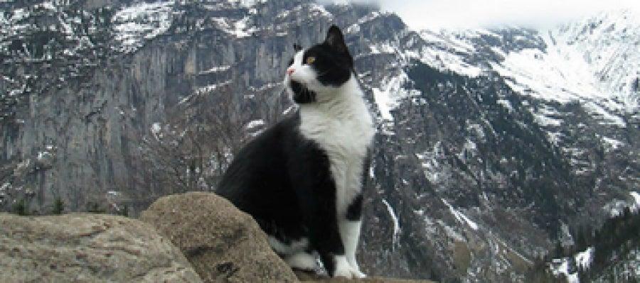 Gato guía de las montañas de Suiza