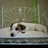 Un perro descansa sobre su cama en un hotel 'pet friendly'