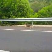 Un perro corre tras el coche de sus dueños tras ser abandonado
