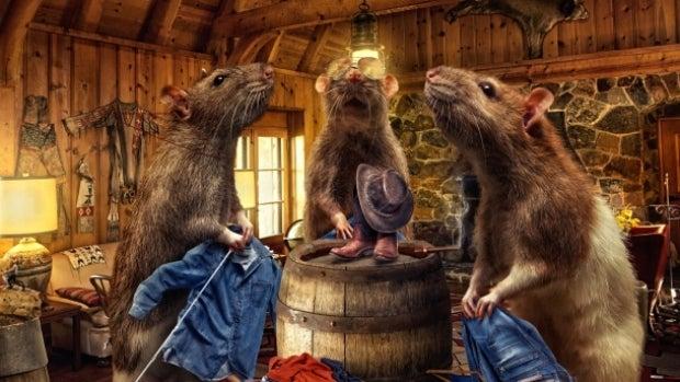 Mesa de redacción: Los IG Nobel premian a unas ratas con pantalones