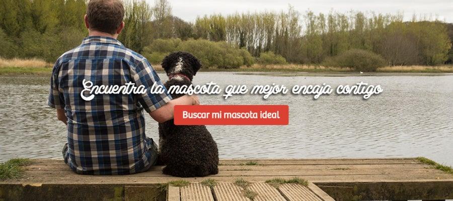 Plataforma de adopción matchcota.com