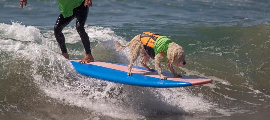 Competición de surf con mascotas