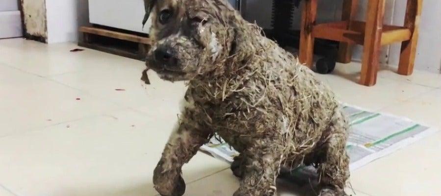 Frame 17.460053 de: El rescate de Pascal, un cachorro al que embadurnaron con pegamento por 'diversión'