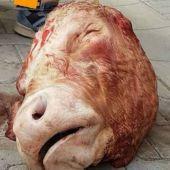 La cabeza de toro lanzada por los aficionados del Dresden