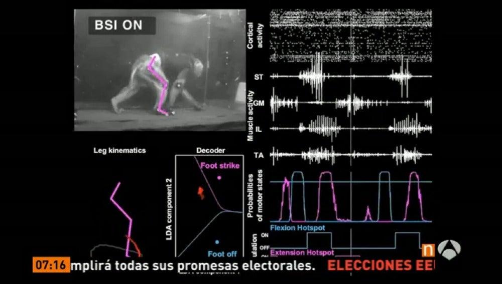 Un mono con parálisis vuelve a caminar gracias a un chip