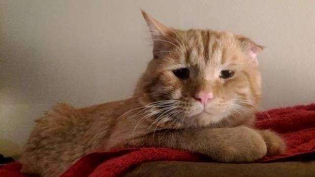 Benben, el gato más triste del mundo