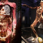 """Human Bodies, The Exhibition"""