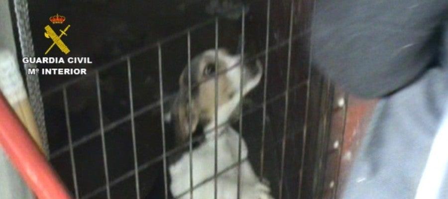 Imagen del criadero ilegal de perros