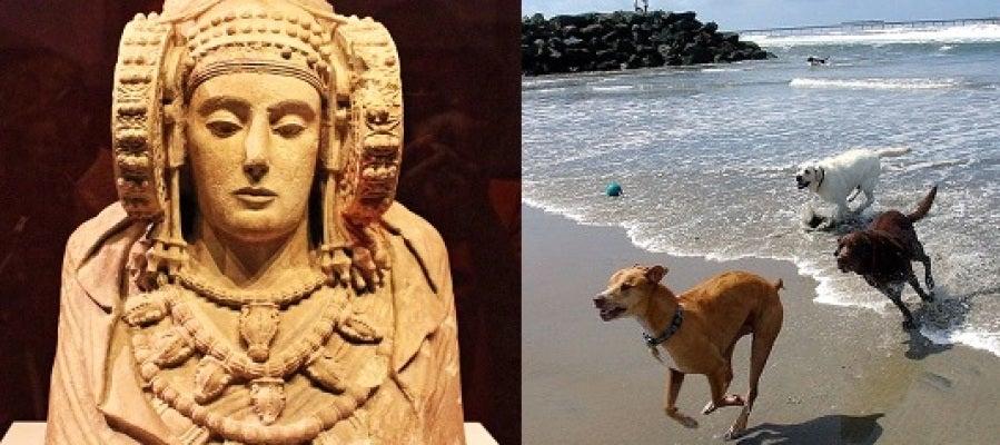La Dama de Elche y la playa para perros han protagonizado el Pleno Municipal de Elche.