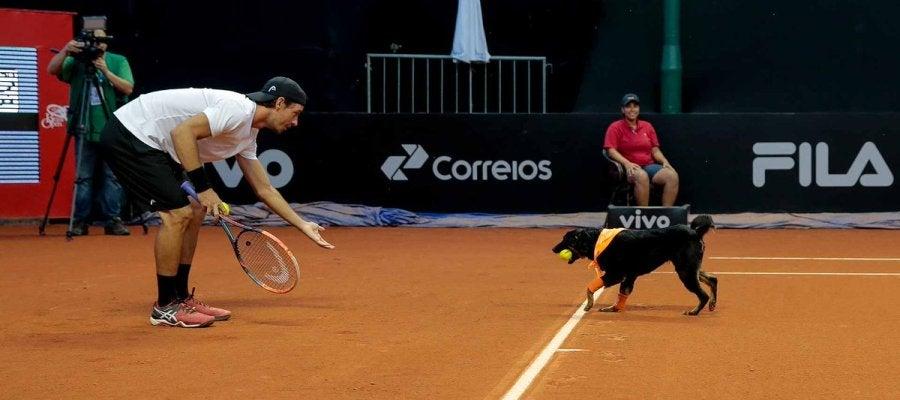 Un perro abandonado, de recogepelotas en el Abierto de Brasil de tenis