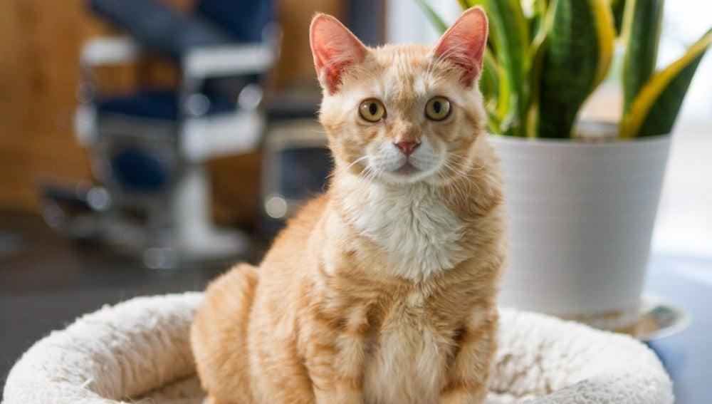Nimo, un gato abandondao que fue rescatado por 'Free Korean Dogs' y ahora vive fuerte y sano