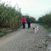 Las quejas por molestias de perros bajan un 19% en un año en Almassora.