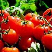 Tomates mas rojos lisos y redondos contra el cancer de colon